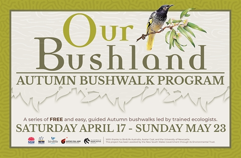 Our Bushland Autumn Bushwalk Program